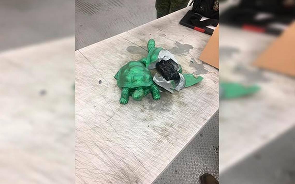 Decomisan tortugas rellenas de cristal - Diario de Querétaro f5ec6fd02811