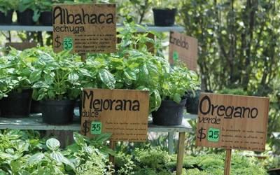 Elaboran Medicinas Con Herbolaria Mexicana Diario De Queretaro